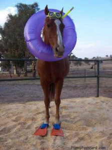 Sea-Horse__NOT