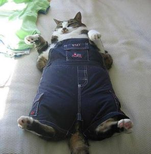 FatCat in Overalls