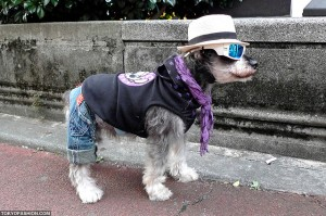 Japanese Doggie in Jeans