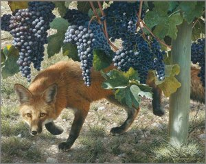 Fox_inVineyard