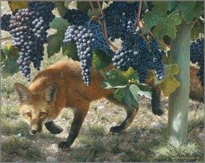 Fox_inVineyard