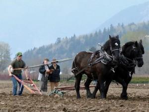 Plowing-a-Field