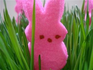 Pink Bunny Peep