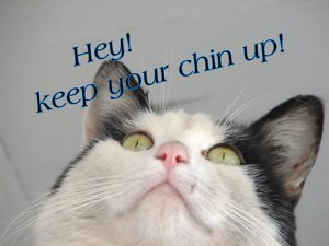 Cat: Keep Your Chin Up!