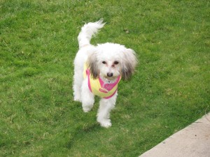 Daisy on grass