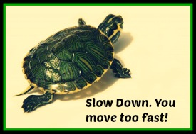 Tortoise_SlowDown_smaller