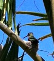 HummingbirdNesting_2cropped