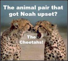 NoahAndTheCheetahs