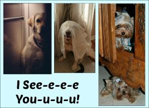 DogsHiding_ISeeYou_LOLwithGod