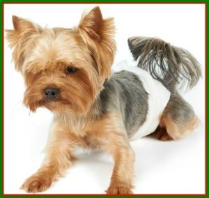 dogindiaper_akc-aboutdogdiapers