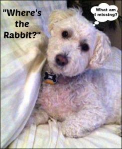 roscoe_whereistherabbit